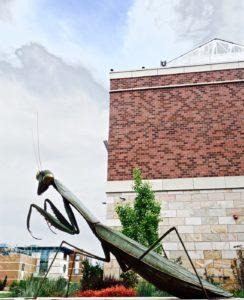 Scott Shaffer praying mantis