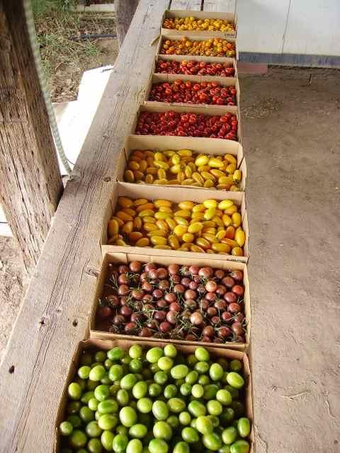 Small Potatoes Farm & Bakery